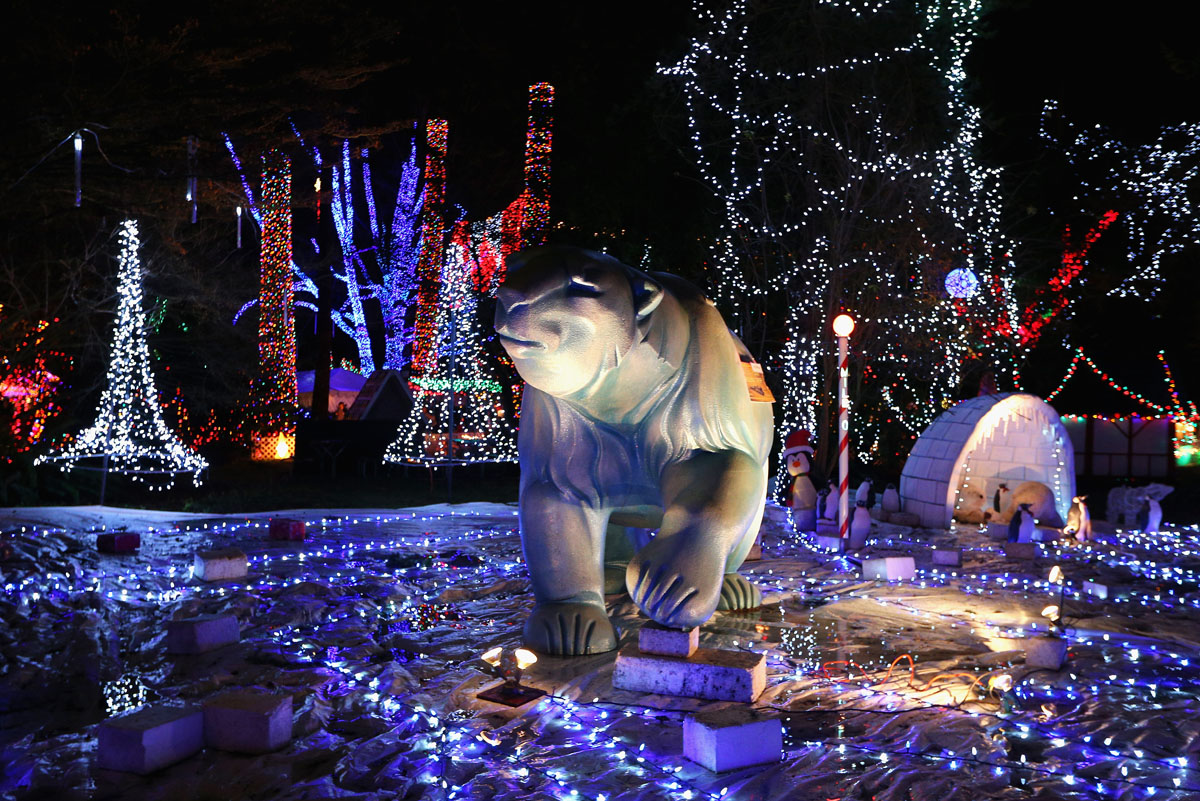 Stanley Park Lights Up For Christmas