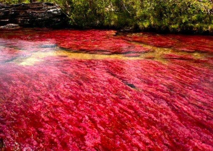 Rio de água vermelha