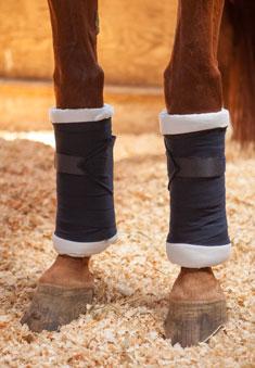 horse legs stall
