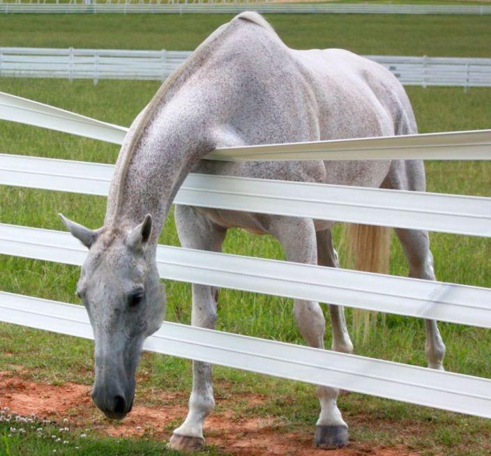 cerca pvc para cavalos